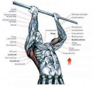Pull Ups Vs Chin Ups Muscle Groups Stud Bar Ceiling Or